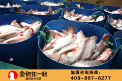 食品安全溯源,鱼你在一起门店菜